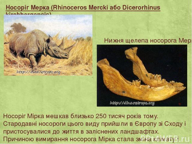 Носоріг Мерка (Rhinoceros Mercki або Dicerorhinus kirchbergensis) Носоріг Мірка мешкав близько 250 тисяч років тому. Стародавні носороги цього виду прийшли в Європу зі Сходу і пристосувалися до життя в заліснених ландшафтах. Причиною вимирання носор…