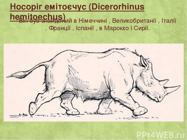 Носоріг емітоєчус (Dicerorhinus hemitoechus) Він був знайдений в Німеччині , Великобританії , Італії , Франції , Іспанії , в Марокко і Сирії.