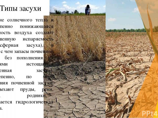 Обилие солнечного тепла и постепенно понижающаяся влажность воздуха создают повышенную испаряемость (атмосферная засуха), в связи с чем запасы почвенной влаги без пополнения их дождями истощаются (почвенная засуха). Постепенно, по мере усиления почв…