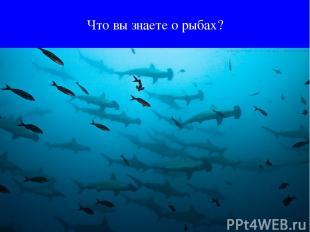 Что вы знаете о рыбах?