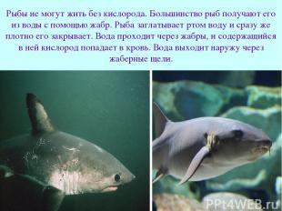 Рыбы не могут жить без кислорода. Большинство рыб получают его из воды с помощью