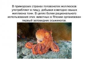В приморских странах головоногих моллюсков употребляют в пищу, добывая ежегодно