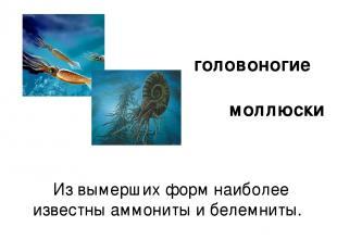 Из вымерших форм наиболее известны аммониты и белемниты. головоногие моллюски