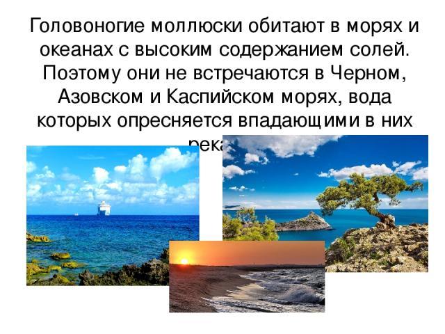 Головоногие моллюски обитают в морях и океанах с высоким содержанием солей. Поэтому они не встречаются в Черном, Азовском и Каспийском морях, вода которых опресняется впадающими в них реками.