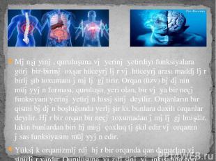 Mənşəyinə, quruluşuna və yerinə yetirdiyi funksiyalara görə bir-birinə oxşar hüc
