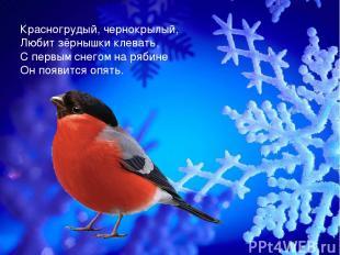 Красногрудый, чернокрылый, Любит зёрнышки клевать, С первым снегом на рябине Он