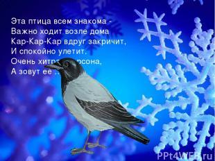 Эта птица всем знакома - Важно ходит возле дома Кар-Кар-Кар вдруг закричит, И