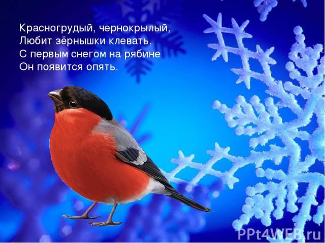 Красногрудый, чернокрылый, Любит зёрнышки клевать, С первым снегом на рябине Он появится опять.