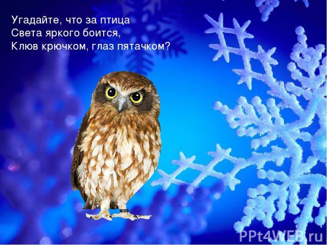 Угадайте, что за птица Света яркого боится, Клюв крючком, глаз пятачком?