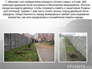 Г. Иваново стал победителем конкурса «Аллея славы» и 6 мая 600 саженцев деревьев