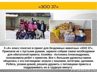 5 «А» класс посетил в приют для бездомных животных «ЗОО 37». Приехали не с пусты