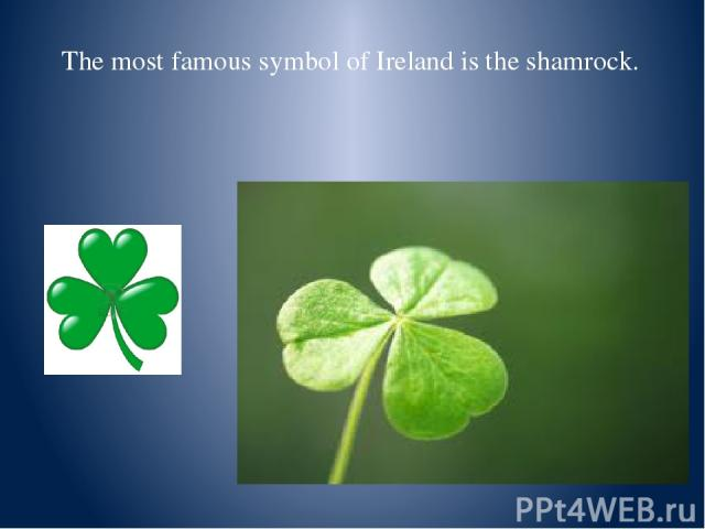 The most famous symbol of Ireland is the shamrock.