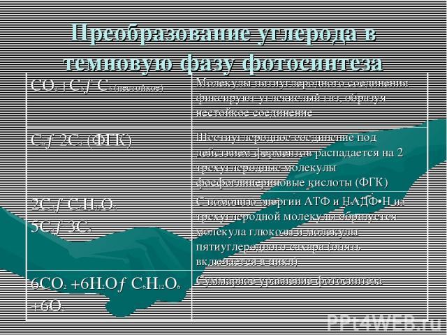 """Презентация на тему """"Темновая фаза фотосинтеза"""" - скачать ...: http://ppt4web.ru/biologija/temnovaja-faza-fotosinteza0.html"""