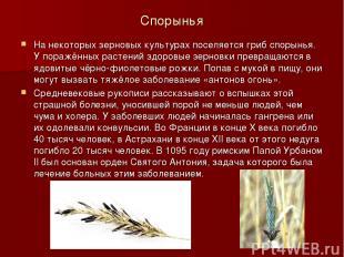 Спорынья На некоторых зерновых культурах поселяется гриб спорынья. У поражённых