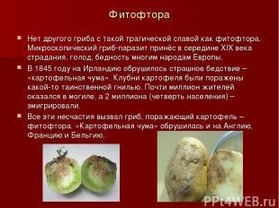 Фитофтора Нет другого гриба с такой трагической славой как фитофтора. Микроскопи