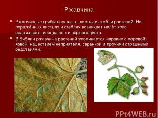 Ржавчина Ржавчинные грибы поражают листья и стебли растений. На поражённых листь