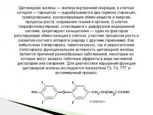Щитовидная железа — железа внутренней секреции, в клетках которой — тироцитах —