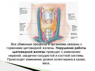 Все обменные процессы в организме связаны с гормонами щитовидной железы.Нарушен