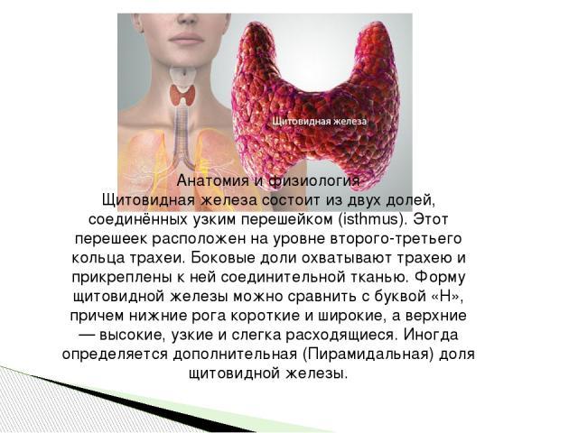 Анатомия и физиология Щитовидная железа состоит из двух долей, соединённых узким перешейком (isthmus). Этот перешеек расположен на уровне второго-третьего кольца трахеи. Боковые доли охватывают трахею и прикреплены к ней соединительной тканью. Форму…