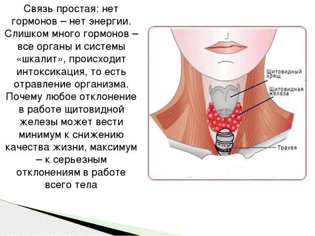 Связь простая: нет гормонов – нет энергии. Слишком много гормонов – все органы и системы «шкалит», происходит интоксикация, то есть отравление организма. Почему любое отклонение в работе щитовидной железы может вести минимум к снижению качества жизн…