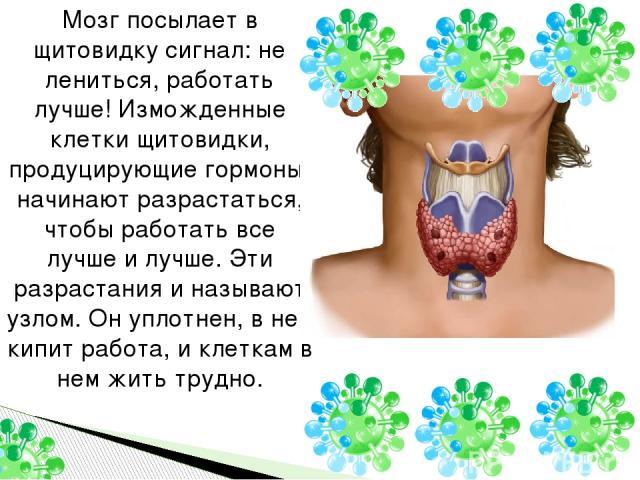 Мозг посылает в щитовидку сигнал: не лениться, работать лучше! Изможденные клетки щитовидки, продуцирующие гормоны, начинают разрастаться, чтобы работать все лучше и лучше. Эти разрастания и называют узлом. Он уплотнен, в нем кипит работа, и клеткам…