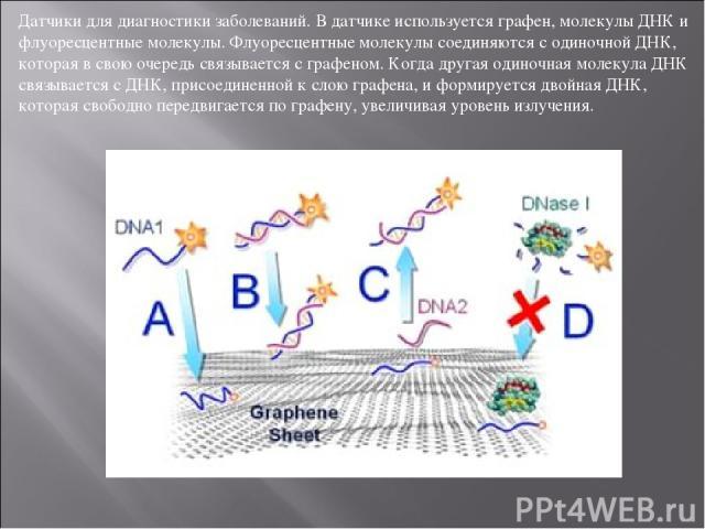 Датчики для диагностики заболеваний. В датчике используется графен, молекулы ДНК и флуоресцентные молекулы. Флуоресцентные молекулы соединяются с одиночной ДНК, которая в свою очередь связывается с графеном. Когда другая одиночная молекула ДНК связы…