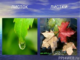 листок листки
