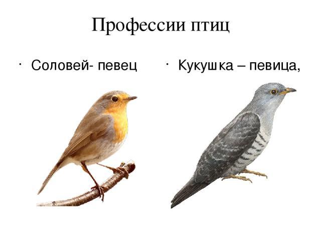 Профессии птиц Соловей- певец Кукушка – певица, счетовод