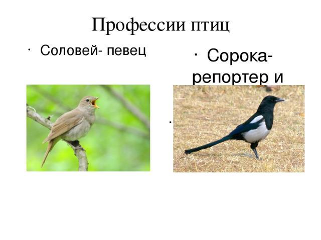 Профессии птиц Соловей- певец Сорока- репортер и журналист ( информационное агенство)