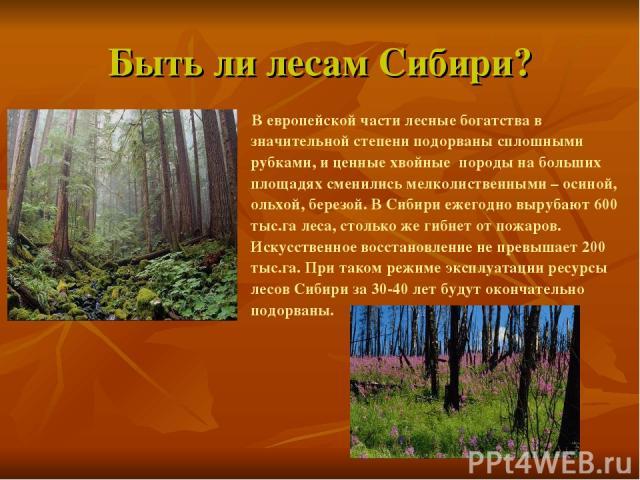 Быть ли лесам Сибири? В европейской части лесные богатства в значительной степени подорваны сплошными рубками, и ценные хвойные породы на больших площадях сменились мелколиственными – осиной, ольхой, березой. В Сибири ежегодно вырубают 600 тыс.га ле…
