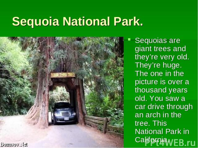 Sequoia National Park. Sequoias are giant trees and they're very old. They're huge. The one in the picture is over a thousand years old. You saw a car drive through an arch in the tree. This National Park in California.