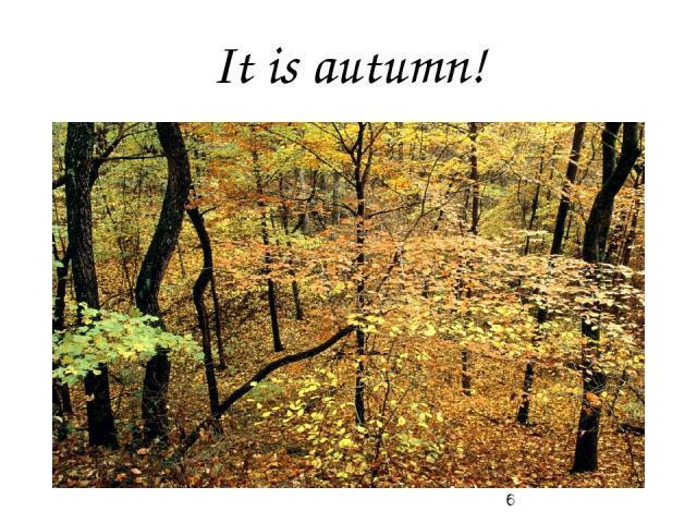 It is autumn!