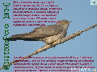 Она размером меньше голубя, длина туловища до 27 см, масса около 80 г, окраска с