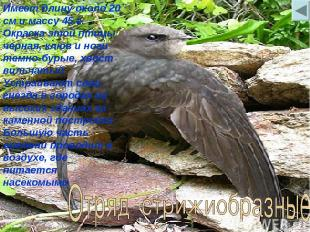Имеет длину около 20 см и массу 45 г. Окраска этой птицы черная, клюв и ноги тем