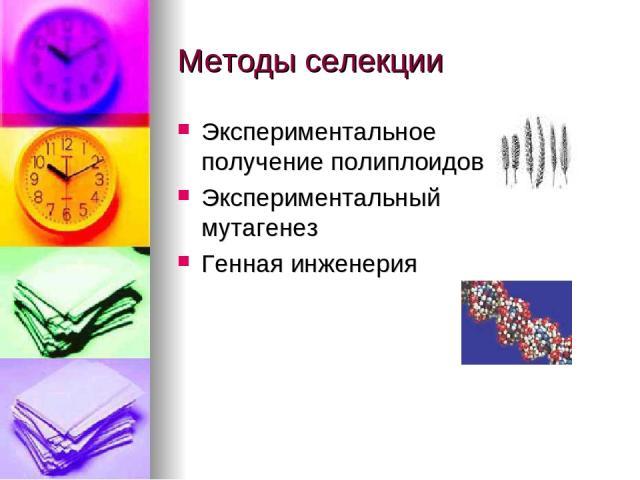 Методы селекции Экспериментальное получение полиплоидов Экспериментальный мутагенез Генная инженерия