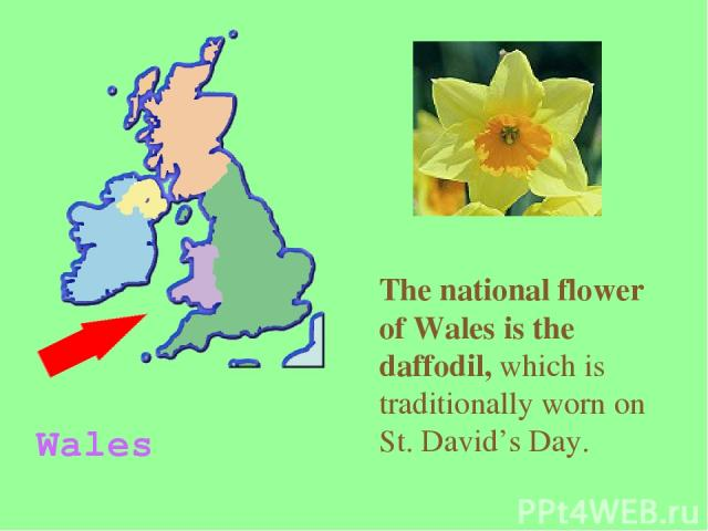 The national flower of Wales is the daffodil, which is traditionally worn on St. David's Day. Wales