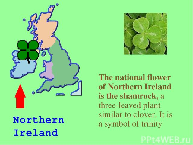 The national flower of Northern Ireland is the shamrock, a three-leaved plant similar to clover. It is a symbol of trinity Northern Ireland