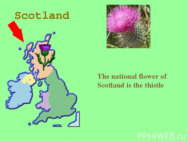 Scotland The national flower of Scotland is the thistle
