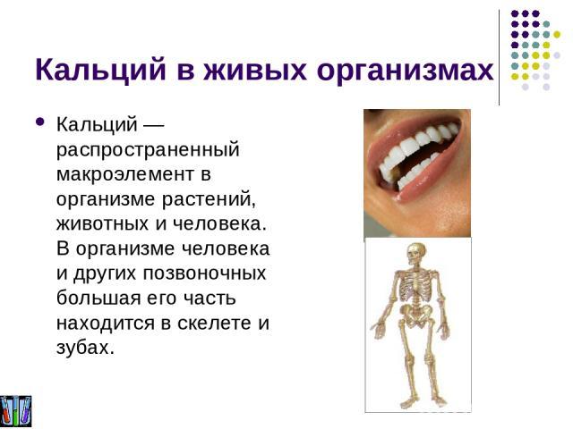 Кальций в живых организмах Кальций — распространенный макроэлемент в организме растений, животных и человека. В организме человека и других позвоночных большая его часть находится в скелете и зубах.