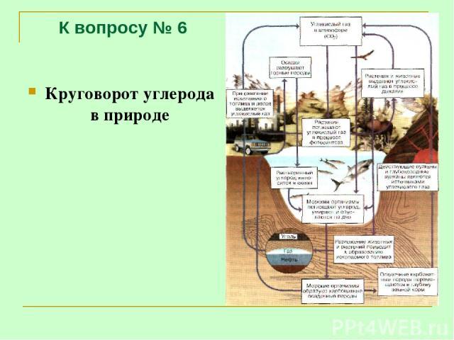 К вопросу № 6 Круговорот углерода в природе