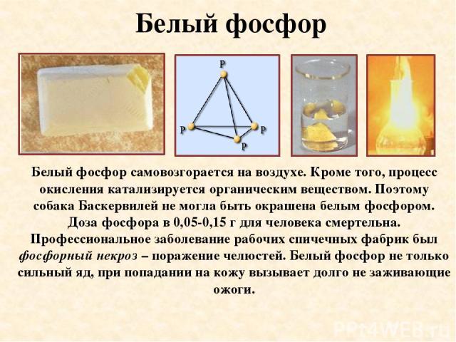 Белый фосфор Белый фосфор самовозгорается на воздухе. Кроме того, процесс окисления катализируется органическим веществом. Поэтому собака Баскервилей не могла быть окрашена белым фосфором. Доза фосфора в 0,05-0,15 г для человека смертельна. Професси…