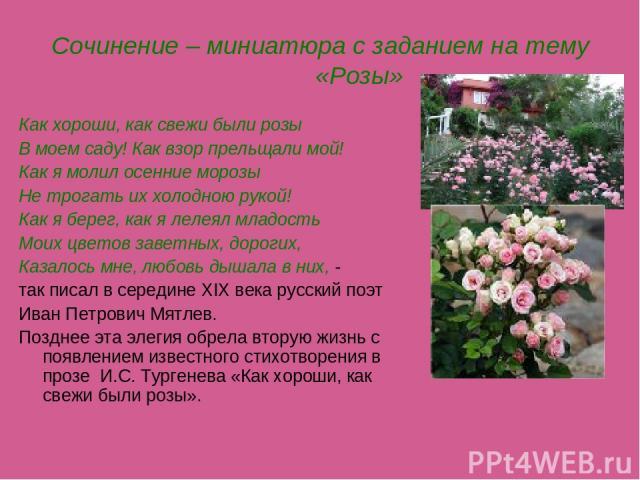 Сочинение – миниатюра с заданием на тему «Розы» Как хороши, как свежи были розы В моем саду! Как взор прельщали мой! Как я молил осенние морозы Не трогать их холодною рукой! Как я берег, как я лелеял младость Моих цветов заветных, дорогих, Казалось …
