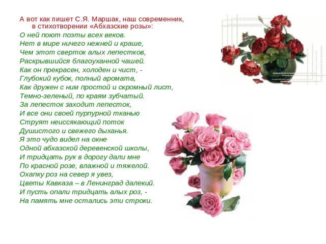 А вот как пишет С.Я. Маршак, наш современник, в стихотворении «Абхазские розы»: О ней поют поэты всех веков. Нет в мире ничего нежней и краше, Чем этот сверток алых лепестков, Раскрывшийся благоуханной чашей. Как он прекрасен, холоден и чист, - Глуб…