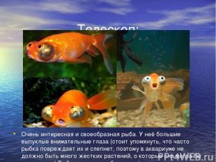 Телескоп: Очень интересная и своеобразная рыба. У неё большие выпуклые вниматель