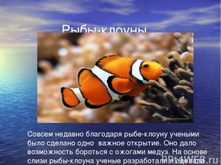 Рыбы-клоуны. Совсем недавно благодаря рыбе-клоуну учеными было сделано одно важн