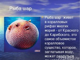 Рыба шар Рыба шар живет вкоралловых рифах многих морей- отКрасного доКарибск