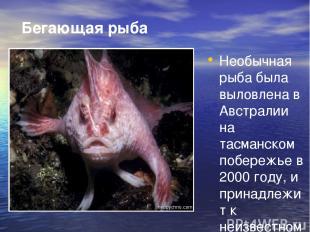 Бегающая рыба Необычная рыба была выловлена в Австралии на тасманском побережье