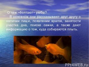 О чем «болтают» рыбы?  В основном они рассказывают друг другу о наличии пищи,