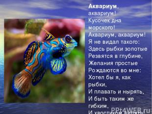 Аквариум, аквариум! Кусочек дна морского! Аквариум, аквариум! Я не видал такого: