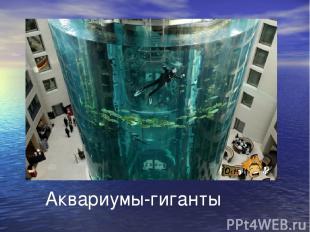 Аквариумы-гиганты
